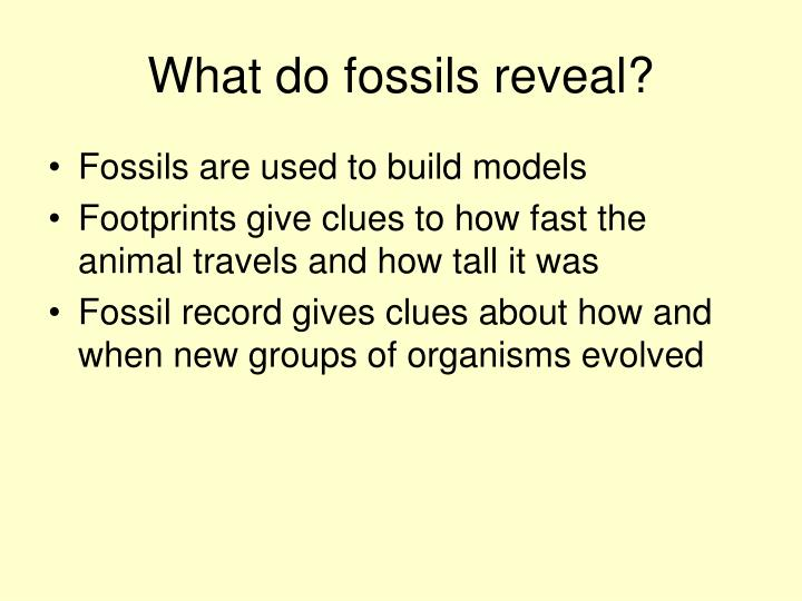 What do fossils reveal?