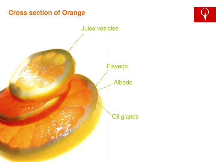 Cross section of Orange