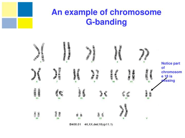 An example of chromosome