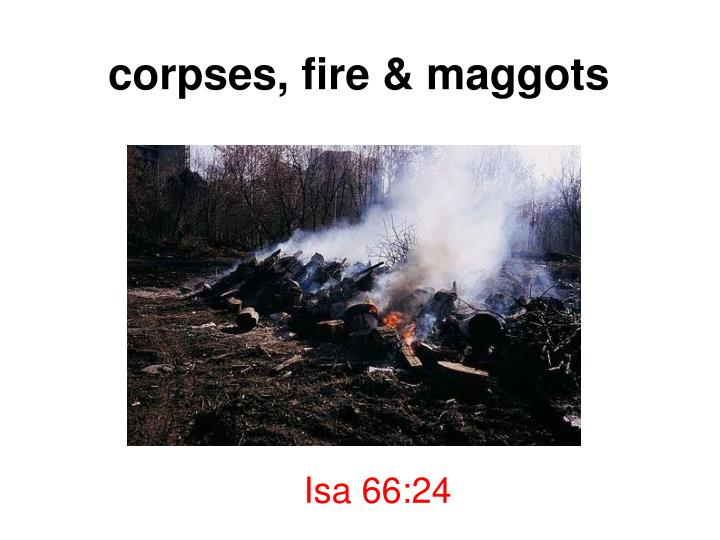 corpses, fire & maggots