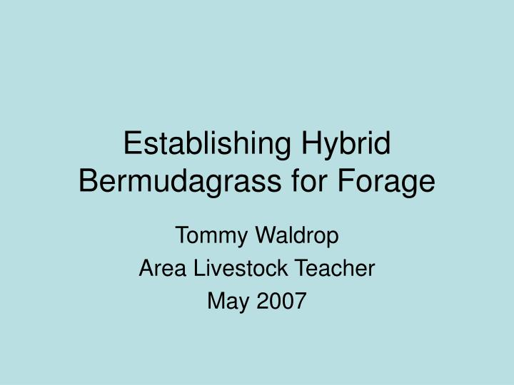 Establishing hybrid bermudagrass for forage