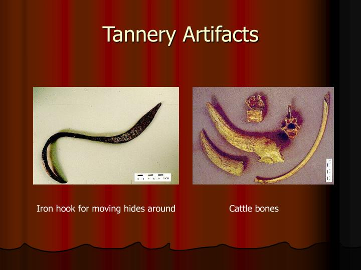 Tannery Artifacts