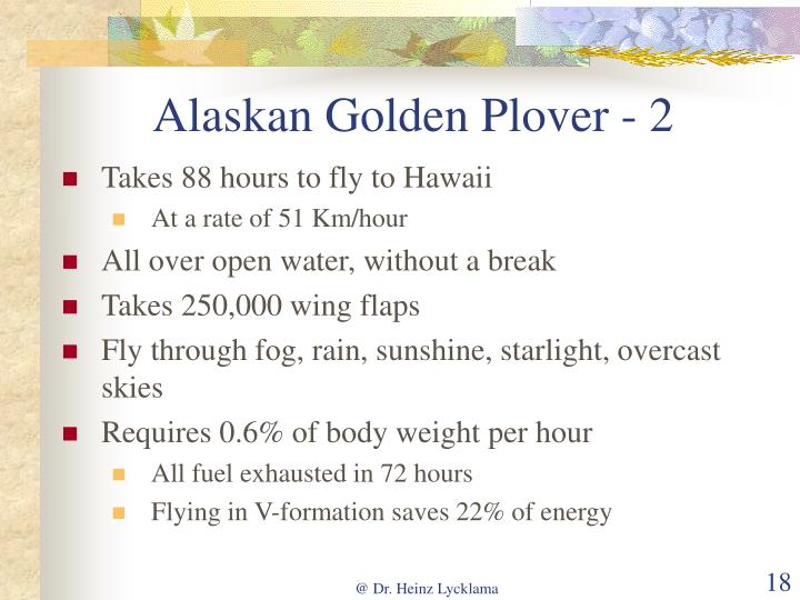 Alaskan Golden Plover - 2