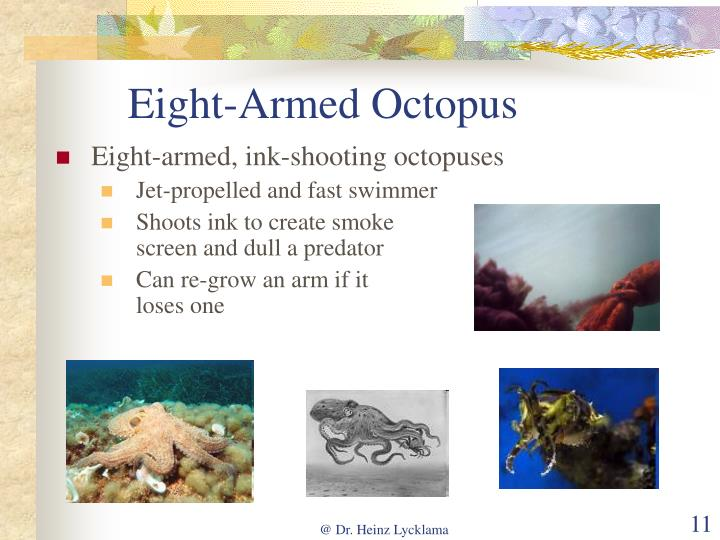 Eight-Armed Octopus