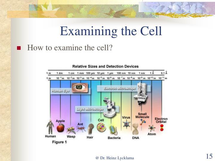 Examining the Cell