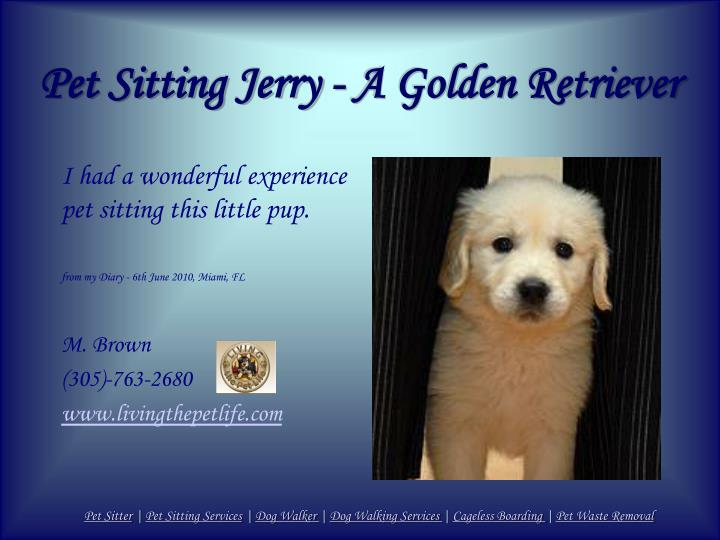 Pet sitting jerry a golden retriever
