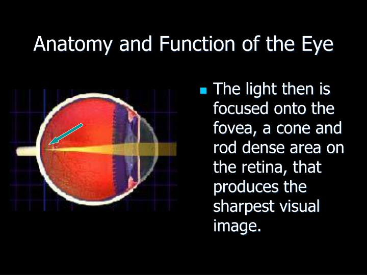 Anatomy and Function of the Eye