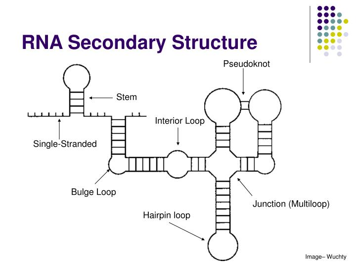 ppt rna secondary structure prediction powerpoint. Black Bedroom Furniture Sets. Home Design Ideas