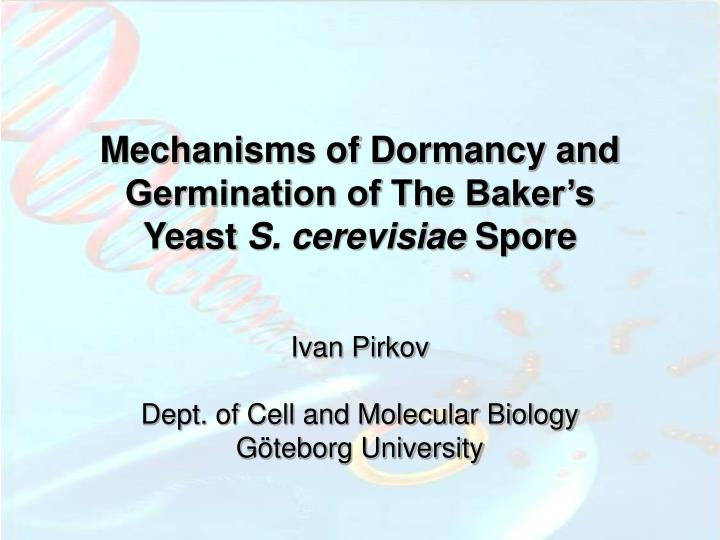 Mechanisms of Dormancy and Germination of The Baker's Yeast