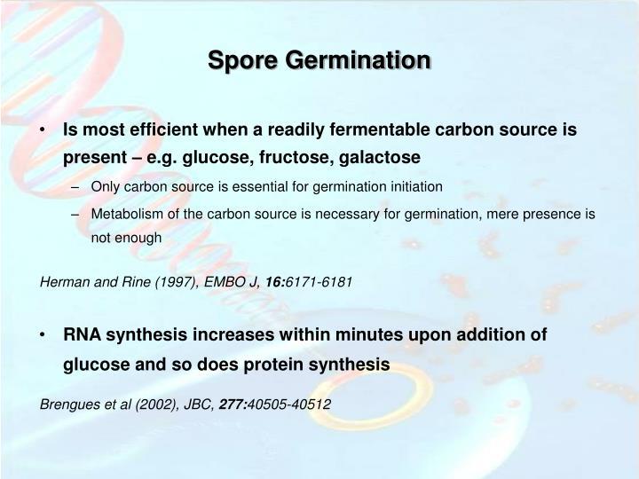 Spore Germination