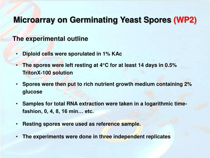 Microarray on Germinating Yeast Spores