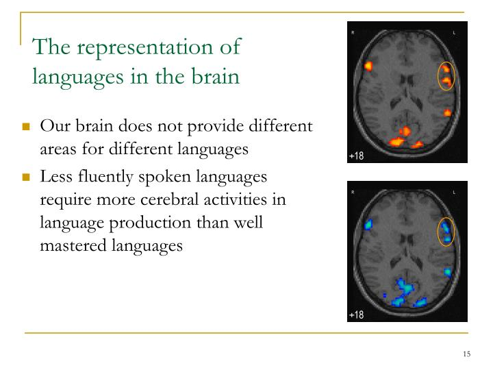The representation of languages in the brain