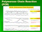 polymerase chain reaction pcr1