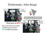 trichromatic after image