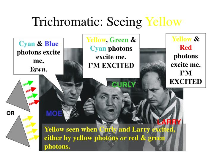 Trichromatic: Seeing