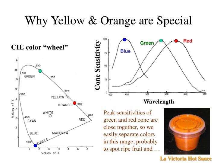 Why Yellow & Orange are Special