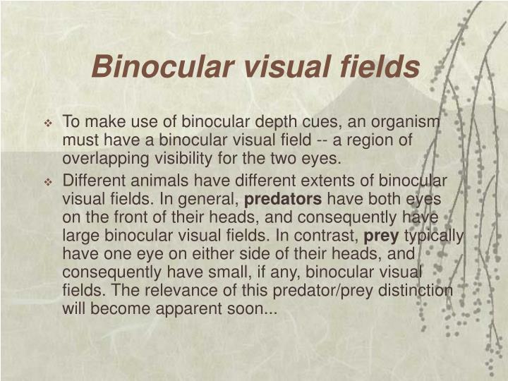 Binocular visual fields