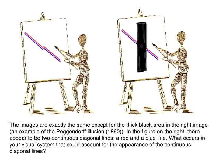 The images are exactly the same except for the thick black area in the right image (an example of the Poggendorff illusion (1860)). In the figure on the right, there appear to be two continuous diagonal lines: a red and a blue line. What occurs in your visual system that could account for the appearance of the continuous diagonal lines?
