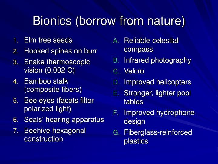 Elm tree seeds