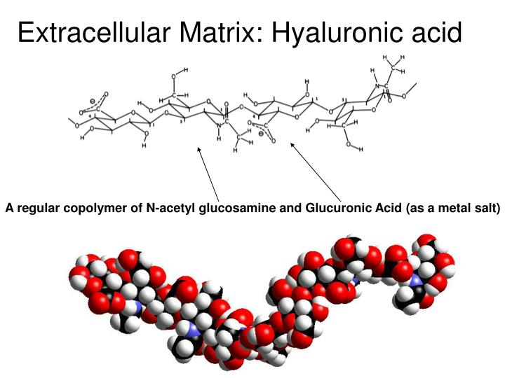 Extracellular Matrix: Hyaluronic acid