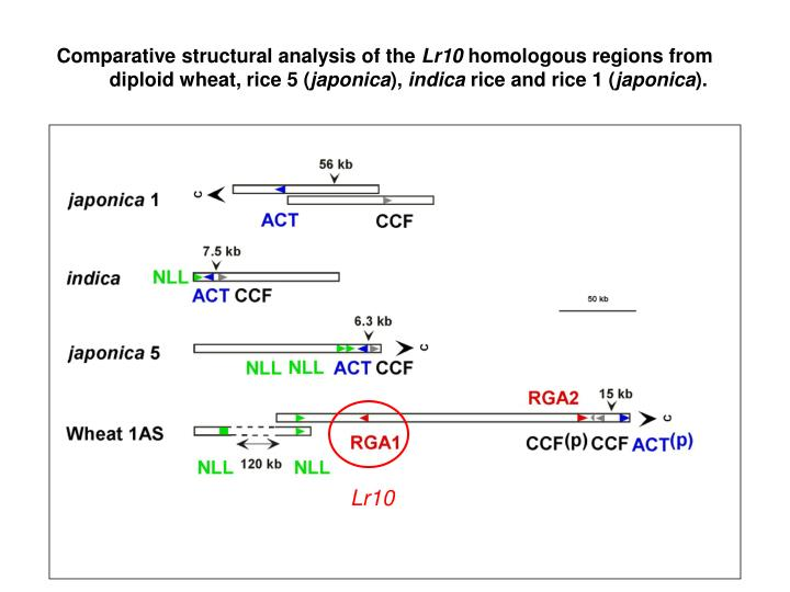 Comparative structural analysis of the
