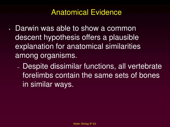 Anatomical Evidence