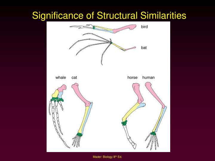 Significance of Structural Similarities