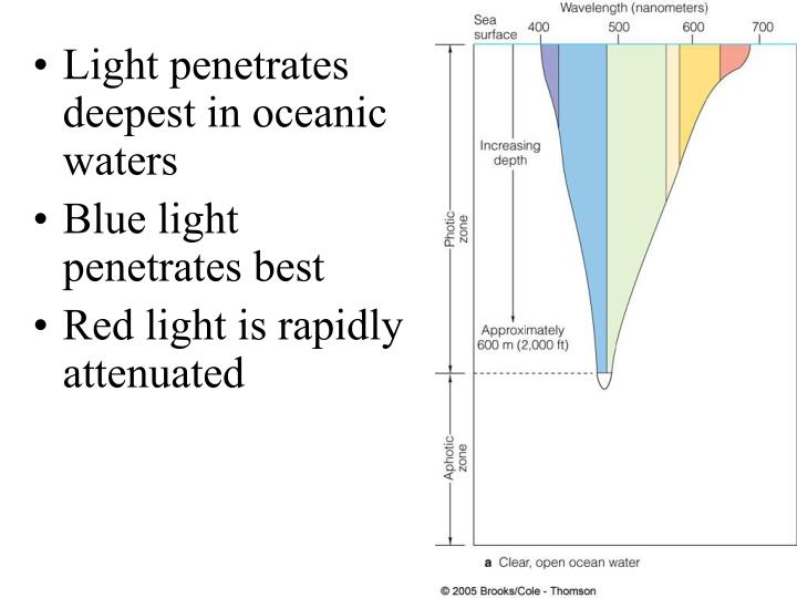 Light penetrates deepest in oceanic waters