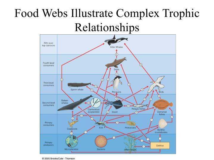Food Webs Illustrate Complex Trophic Relationships