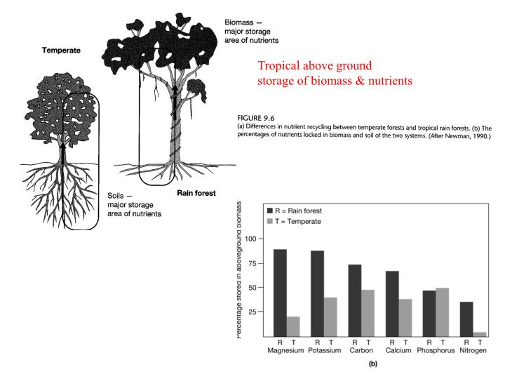 Tropical above ground