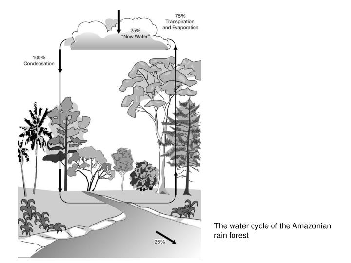 The water cycle of the Amazonian rain forest