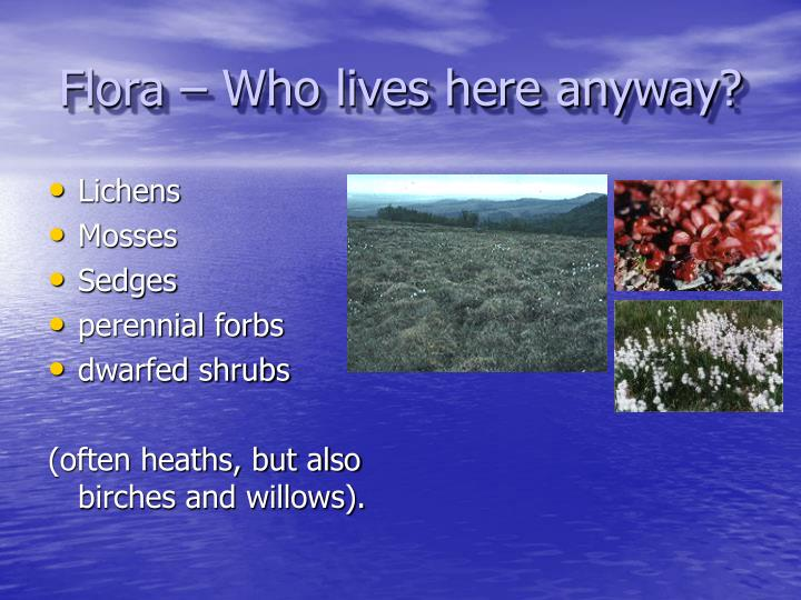 Flora – Who lives here anyway?