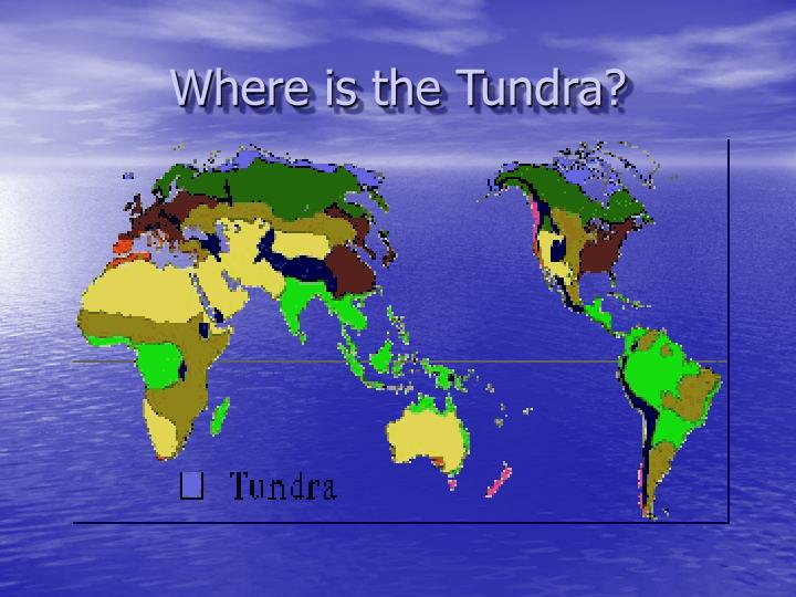 Where is the Tundra?