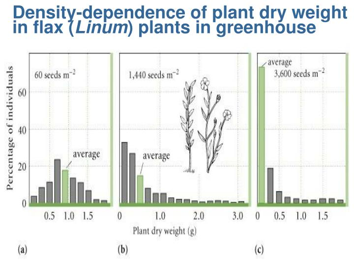 Density-dependence of plant dry weight in flax (