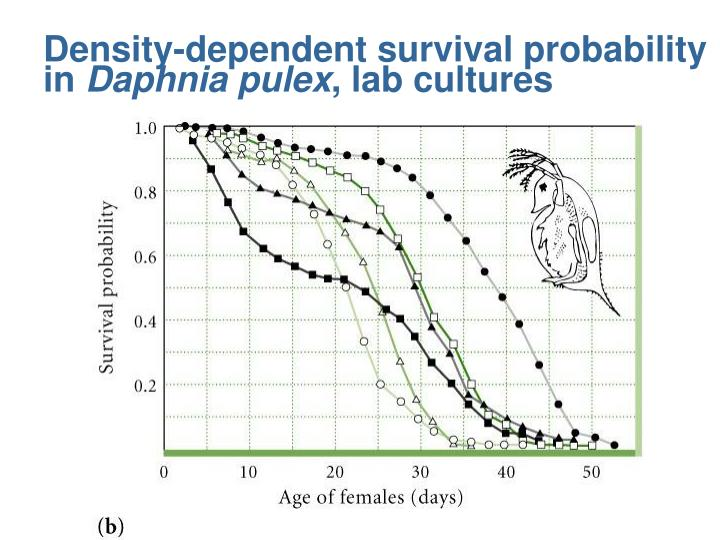 Density-dependent survival probability in
