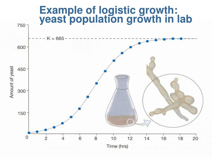 Example of logistic growth: yeast population growth in lab