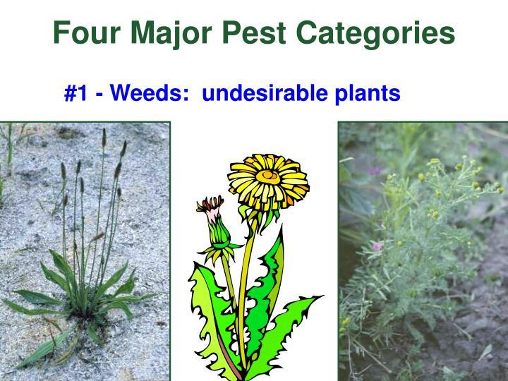 Four Major Pest Categories