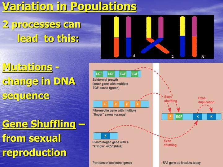 Variation in Populations