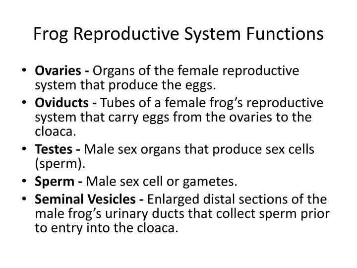 Frog Reproductive System Functions