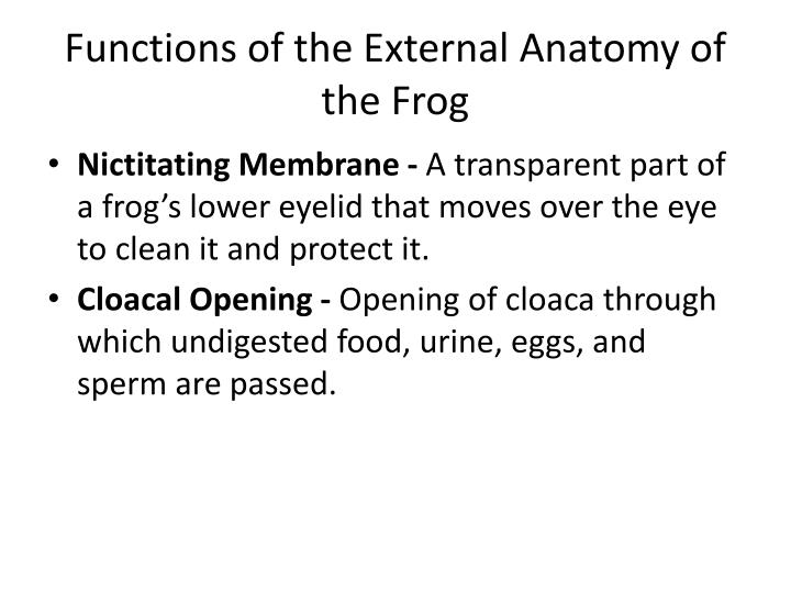 Functions of the External Anatomy of the Frog