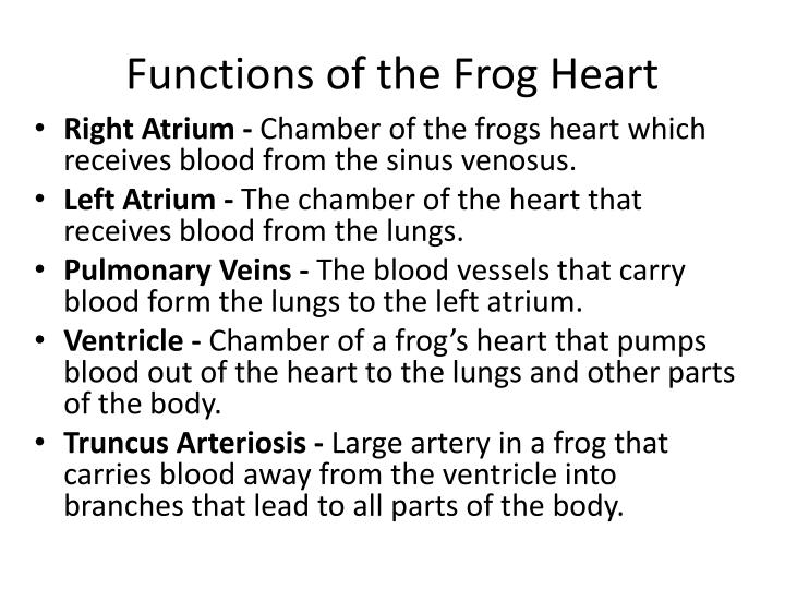 Functions of the Frog Heart