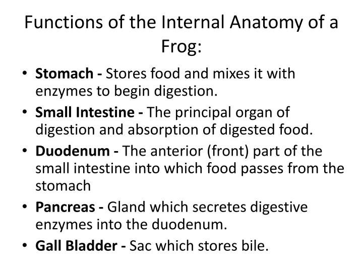 Functions of the Internal Anatomy of a Frog: