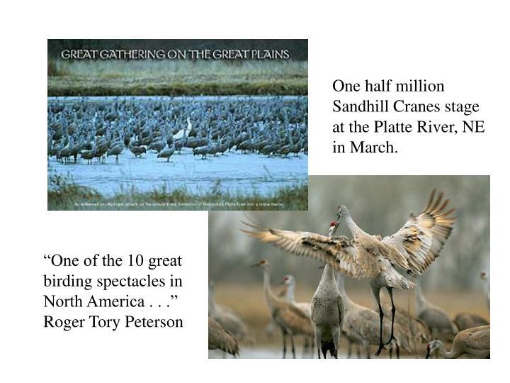 One half million Sandhill Cranes stage at the Platte River, NE in March.
