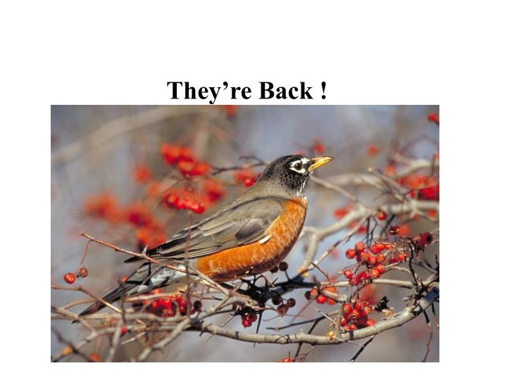 They're Back !