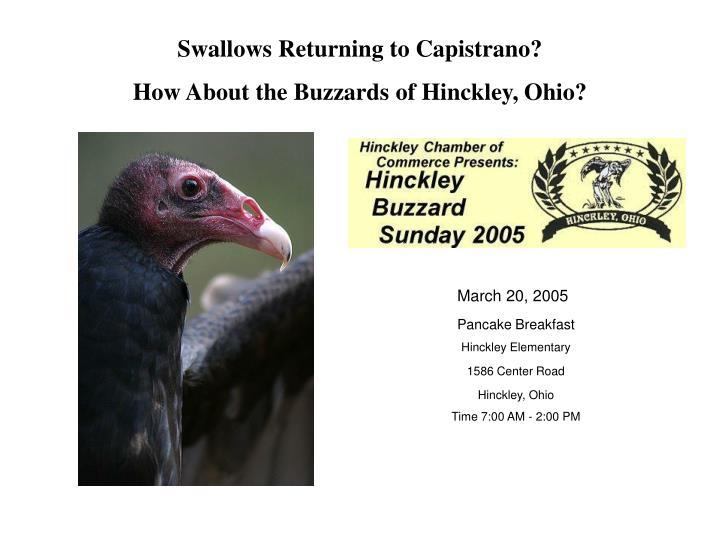 Swallows Returning to Capistrano?
