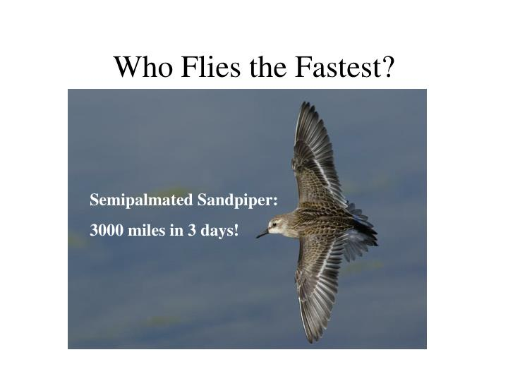 Who Flies the Fastest?