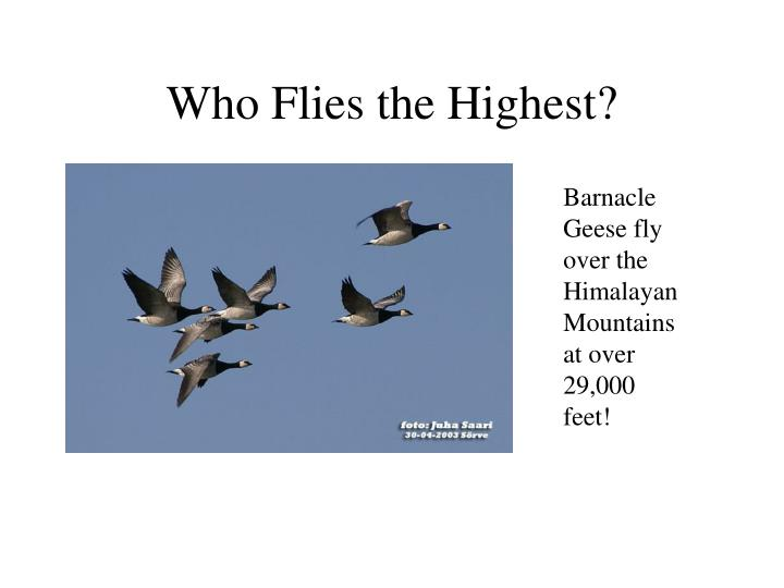 Who Flies the Highest?