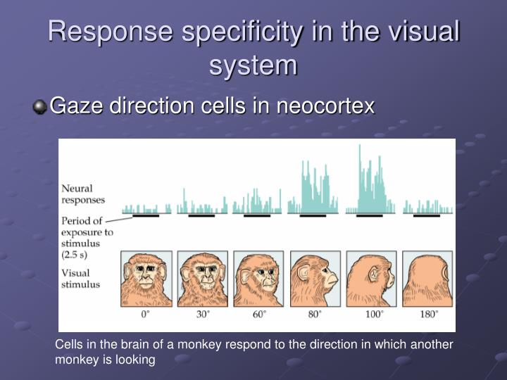 Response specificity in the visual system