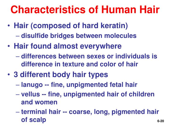 Characteristics of Human Hair