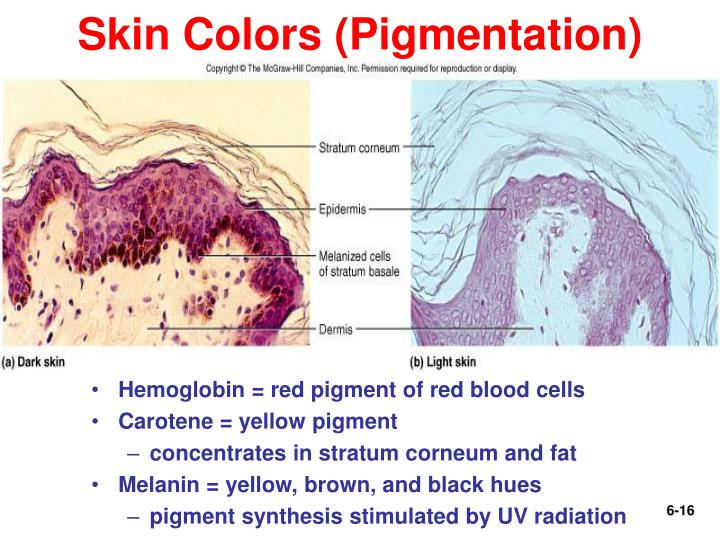 Skin Colors (Pigmentation)